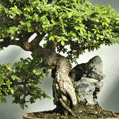 BlocConseil_dompter-son-bonsai