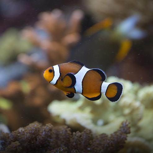 BlocConseil_la-qualite-de-l-eau-d-un-aquarium