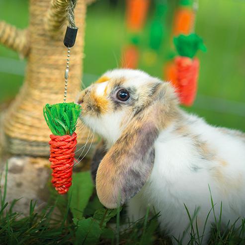 BlocConseil_lapins-de-jardin