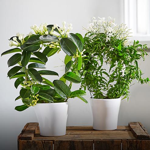 BlocConseil_le-printemps-des-plantes-d-interieur
