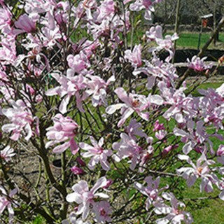 BlocConseil_les-belles-floraisons-du-printemps