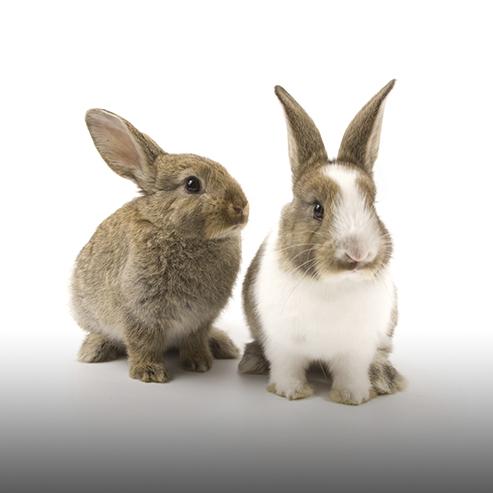 BlocConseil_les-races-de-lapin