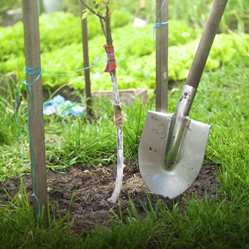 plantation-les-bons-soins-pour-une-bonne-reprise_BlocConseil