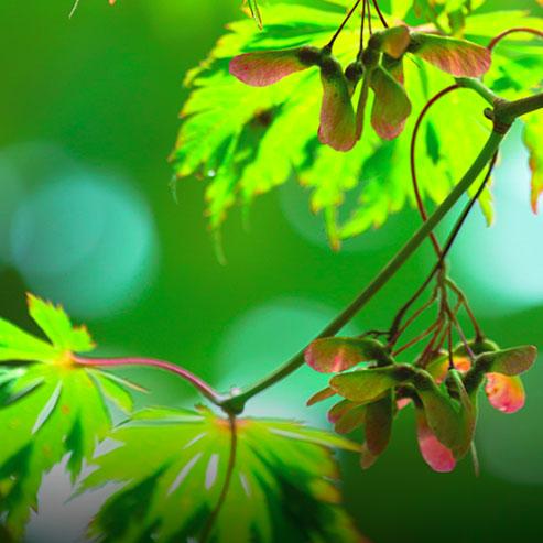 BlocConseil_planter-un-arbre-d-ornement-a-racines-nues