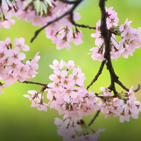 BlocConseil_pour-un-printemps-fleuri