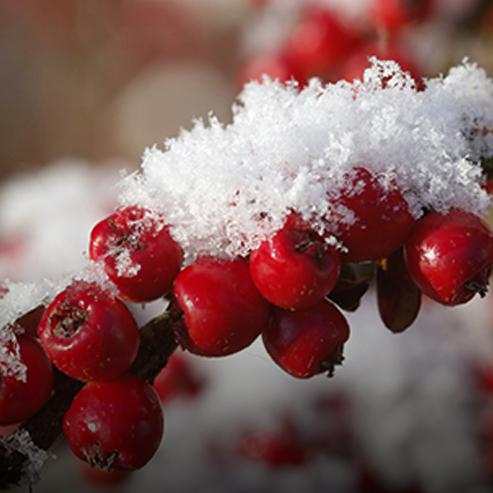 BlocConseil_preparez-vos-plantes-a-l-hiver