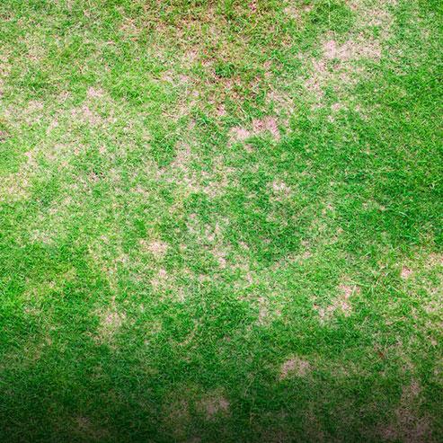 BlocConseil_que-planter-et-comment-dans-un-sol-sec