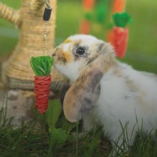 rongeurs-et-lapins-qu-y-a-t-il-au-menu_BlocConseil