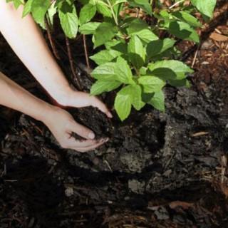 BlocConseil_semer-des-engrais-verts