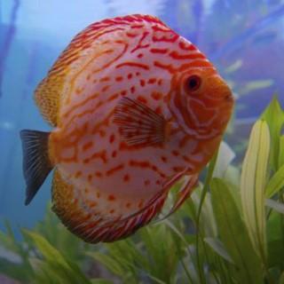 BlocConseil_un-poisson-nomme-discus
