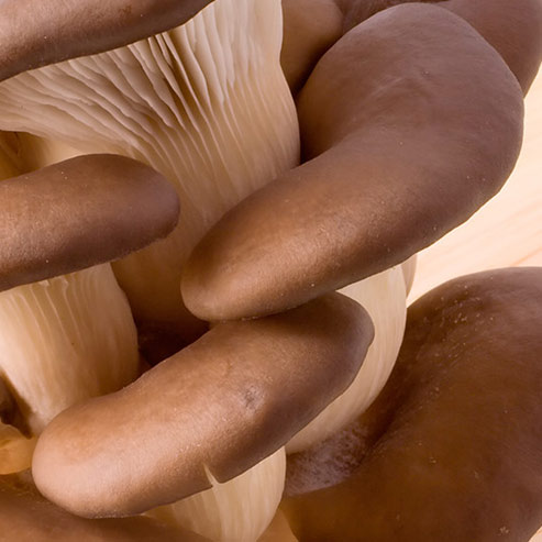 BlocConseil_faites-pousser-vos-champignons