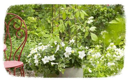 conseils jardin astuces et conseils jardin botanic botanic. Black Bedroom Furniture Sets. Home Design Ideas