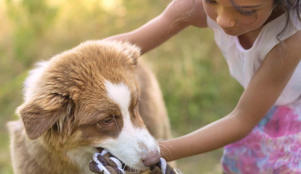 Bien nourrir son chien