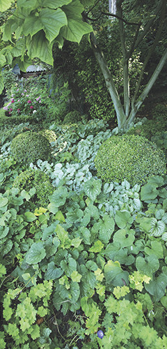 les plantes couvre sol d roulez le tapis vert conseil jardin botanic botanic. Black Bedroom Furniture Sets. Home Design Ideas