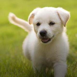 BlocConseil_bien-choisir-son-chien