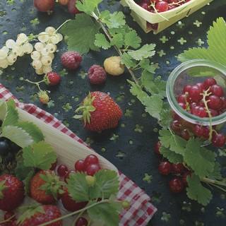BlocConseil_les-petits-fruits-delices-au-jardin