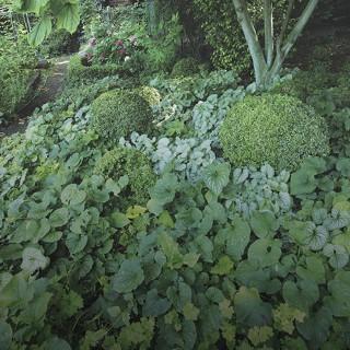 plante couvre sol croissance rapide good luexpansion couvre sol des ophiopogon permet de les. Black Bedroom Furniture Sets. Home Design Ideas