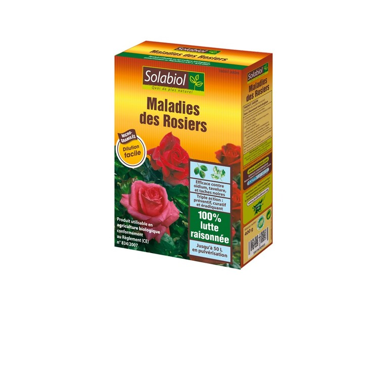 Maladies des rosiers