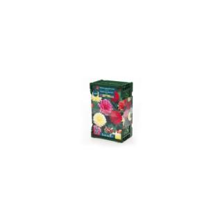 7 bulbes dahlia décoratif nain No.I - clayette