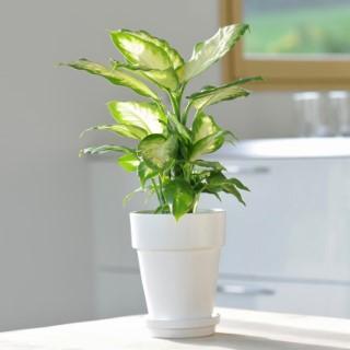 Plante interieur facile entretien maison design - Grande plante d interieur facile d entretien ...