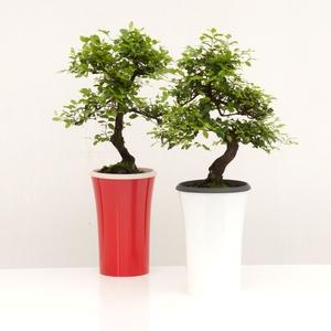 Bonsaï Miss Line Le pot à réserve d'eau, hauteur 40 à 45 cm
