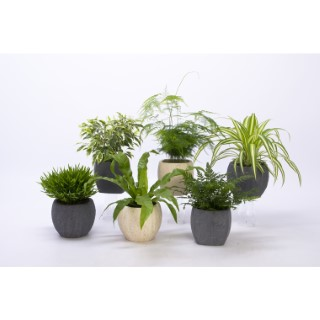 PLANTES VARIEES + CP