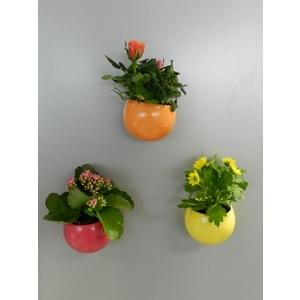 Plante fleurie + Cache-pot magnétique