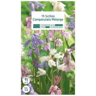 15 bulbes de Scille Campanulée (Scilla Campanulata)