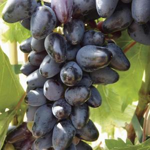 Vigne Philipp Le pot de 2 litres
