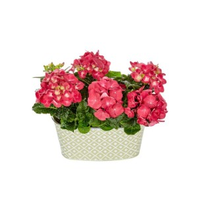 Jardinière d'hortensias