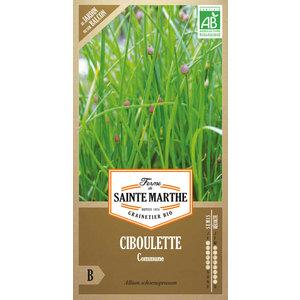 Ciboulette 162935