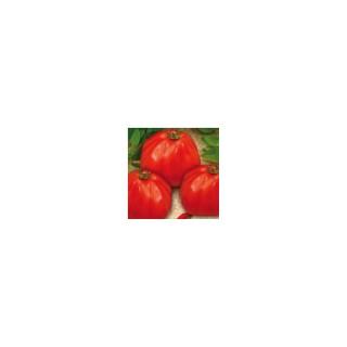 Tomate Coeur de Boeuf Corazon - Prix au kg
