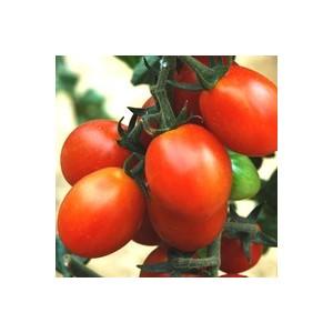 Tomate cerise allongée aligotée