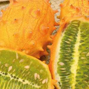 Kiwano bio. Le pot compostable de 10.5 cm 191184