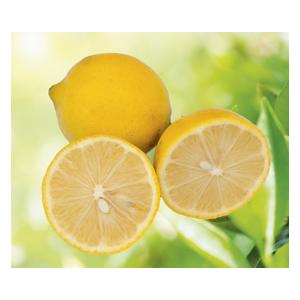 Lime Douce de Palestine en pot de 3 L Bio