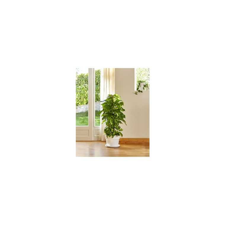 Plantes d 39 int rieur facile entretenir plantes et for Plantes tropicales d interieur