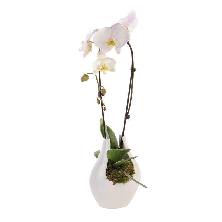 Orchidée cascade 102999