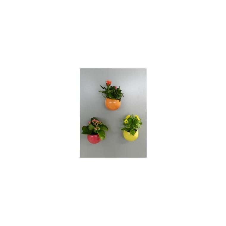 Plante fleurie + Cache-pot magnétique 128022