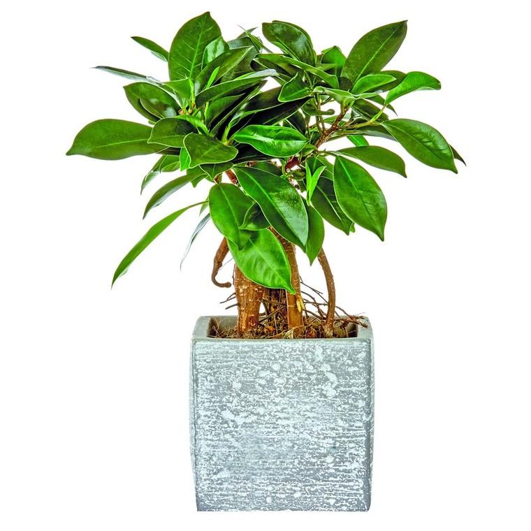Plantes vertes et son cache pot 130142