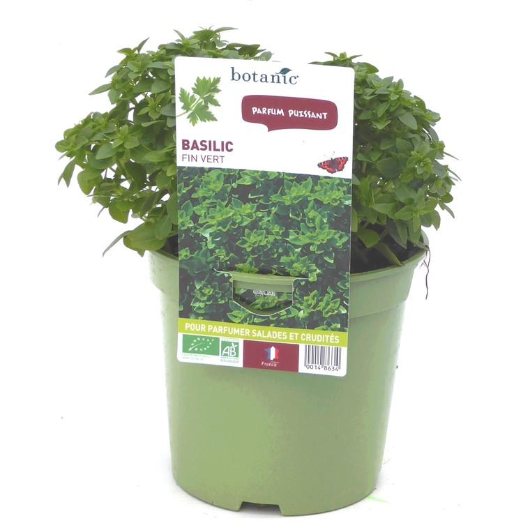 Basilic Fin Vert bio. Le pot de 1 litre recyclé 14863