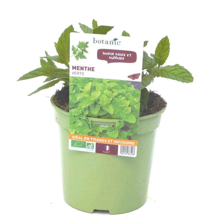 Menthe Verte bio. Le pot de 1 litre recyclé 14872