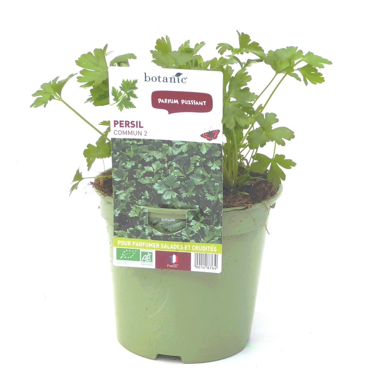 Persil Commun Dit Plat bio. Le pot de 1 litre recyclé 14876