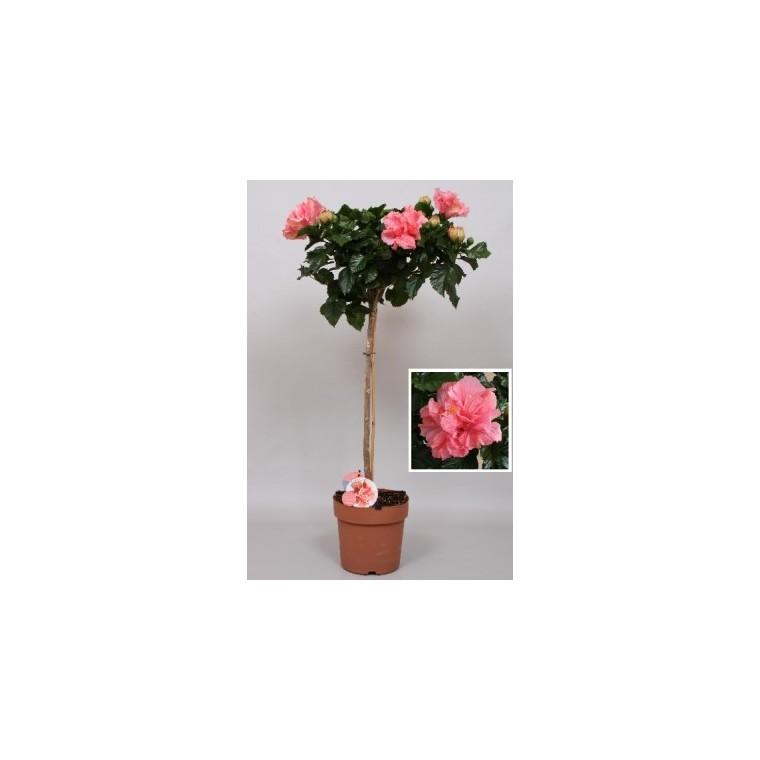 Hibiscus rose Ø 23 cm 177830