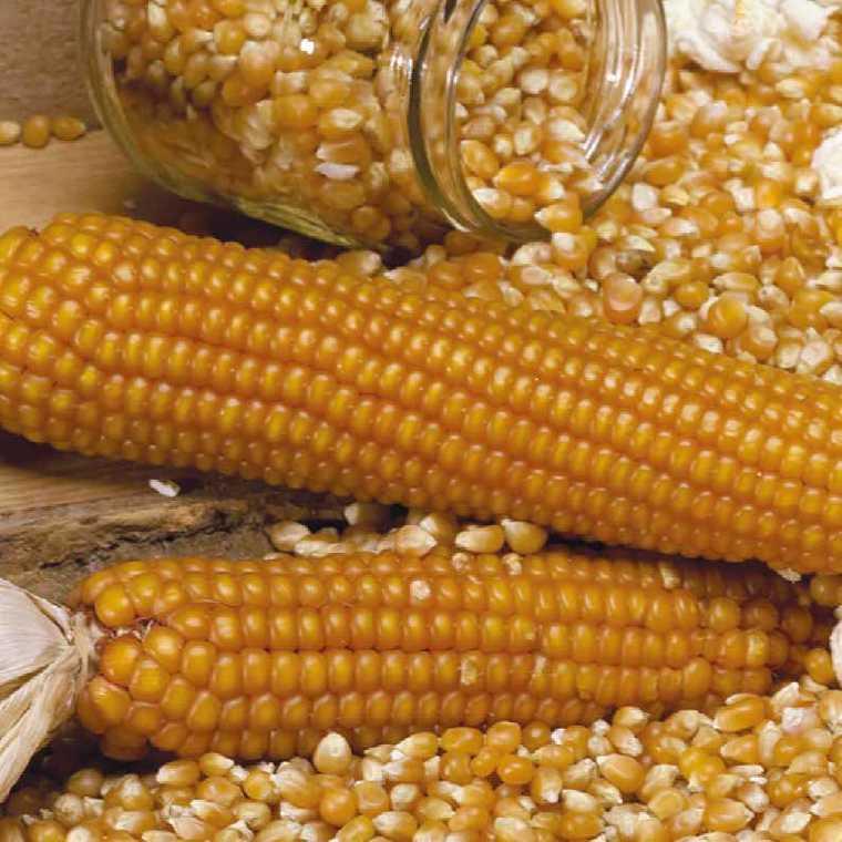 Maïs Doux Golden bantam bio. Le pot de 1 litre recyclé 191188