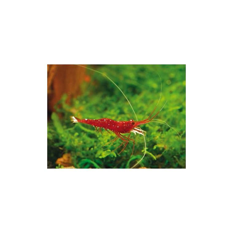Aquarium eau douce poissons for Poisson vpc