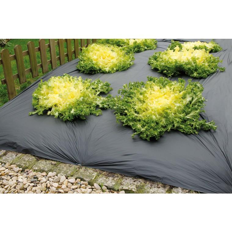 toile de paillage agrobio 1 05x10 m paillages potager potager botanic. Black Bedroom Furniture Sets. Home Design Ideas