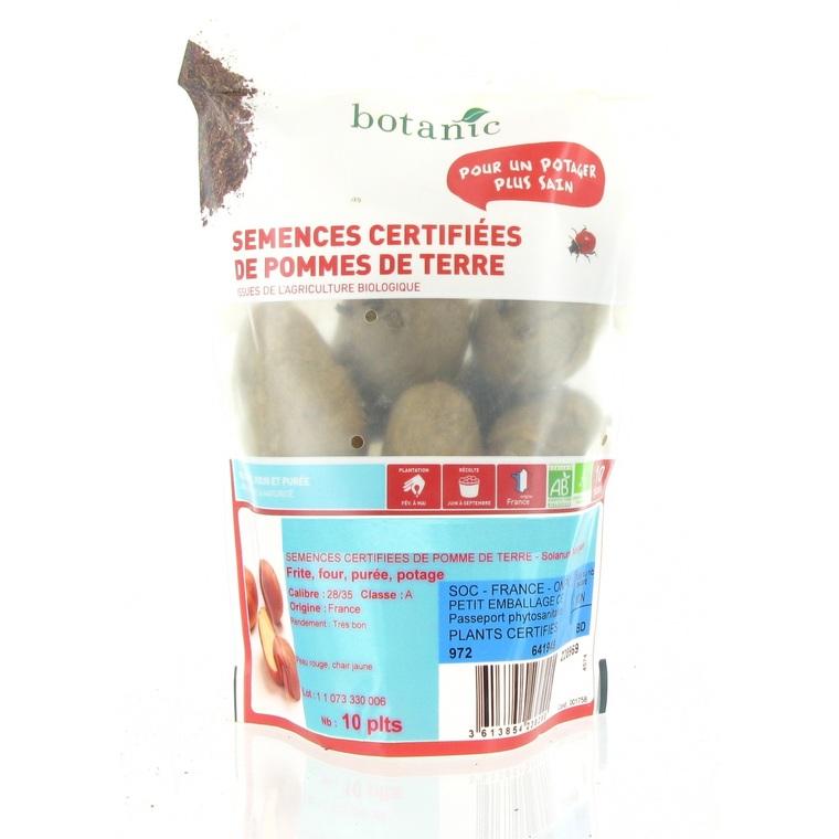 Pommes de terre Delphine bio calibre 0001, 10 plants