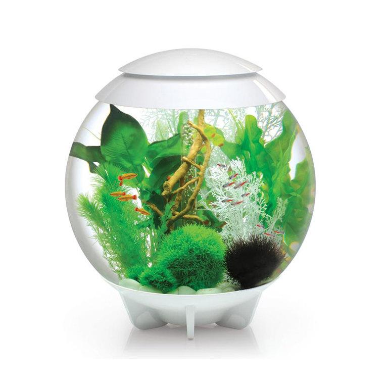 Aquarium biorb halo blanc 60l botanic for Acheter poisson rouge botanic
