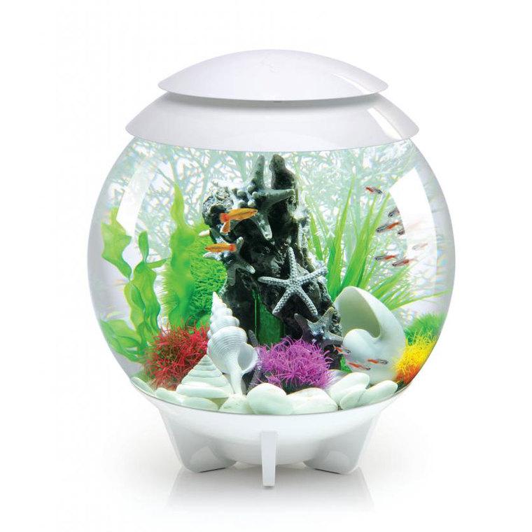 aquarium biorb halo blanc 30l aquariums autres marques. Black Bedroom Furniture Sets. Home Design Ideas