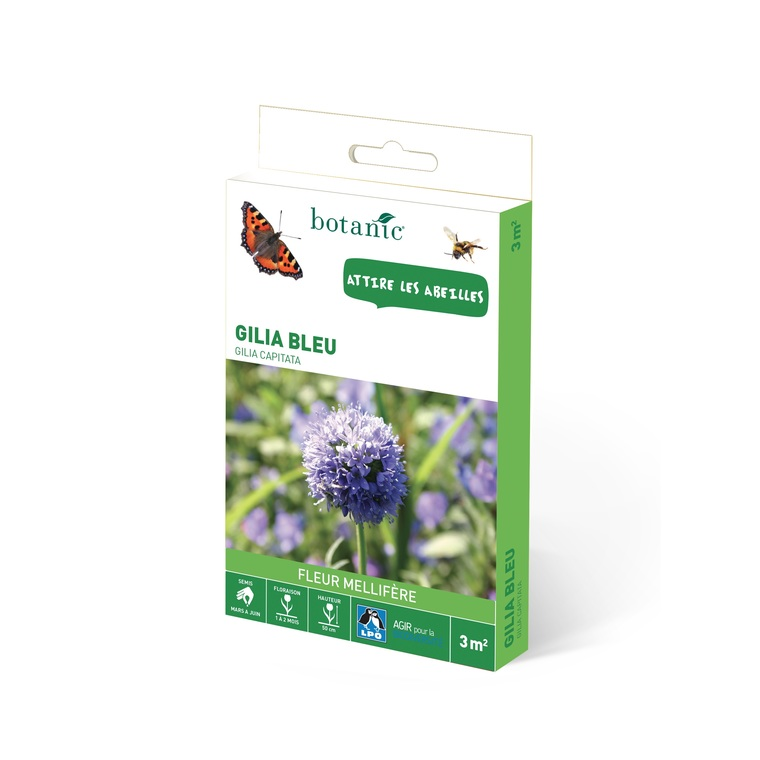 Gilia bleu